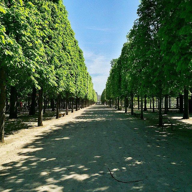 In the garden #jardin #jardindestuileries #paris